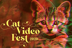 Movie poster from Cat Video Fest 2020