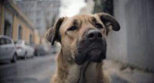 Stray dog from movie STRAY in the streets of Istanbul