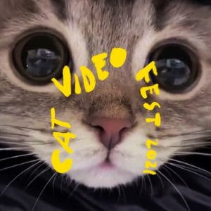 cat looking super cute